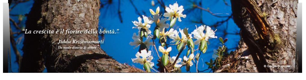 primavera-alberi-fiorire-bonta